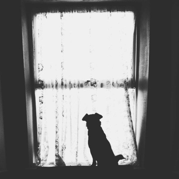 waiting dog