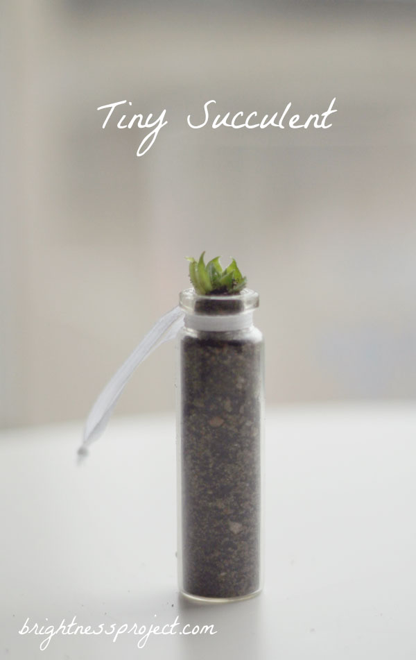 Tiny succulent in a bottle