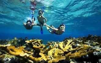 350_alg_snorkeling