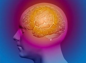 mind-brain-151208