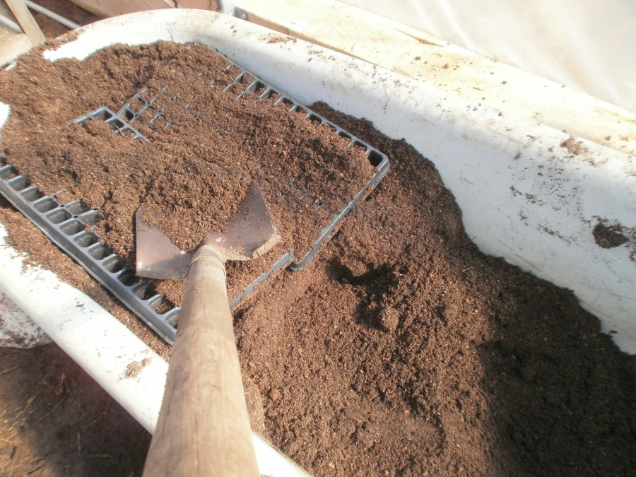 Filling trays with potting mix