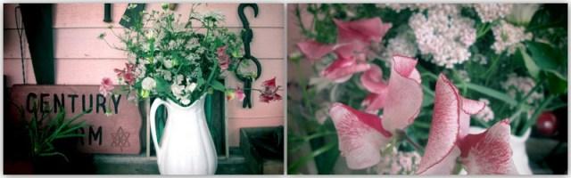 June wanderings