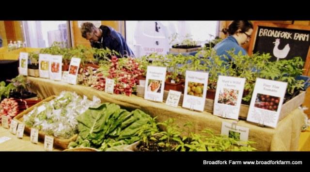 Seedlings at Market
