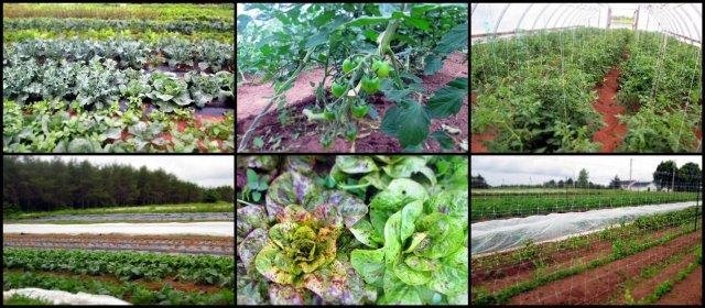 Alva Farm
