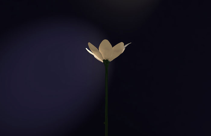 murlo-jasmine