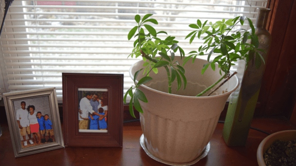 What My Houseplants Teach Me About Self-Care