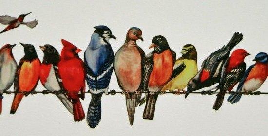 line of birds
