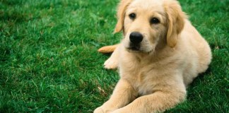 5 Things Your Dog Knows About You