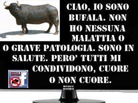 Bufala cornuta.