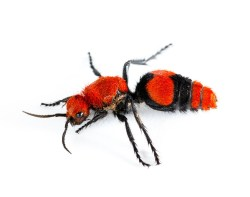 Diverting Cow Killer Spray My Yard Cow Killer Spray My Yard Pest Control Chemicals How To Kill Ground Bees Wasps How To Kill Ground Bees Without Chemicals