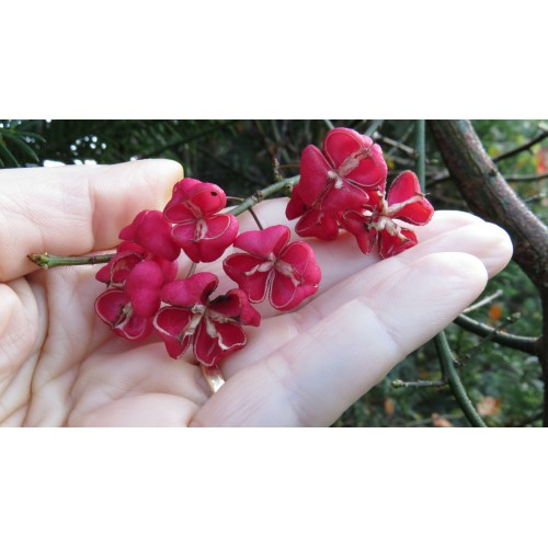 Medium Crop Of Petals From The Past