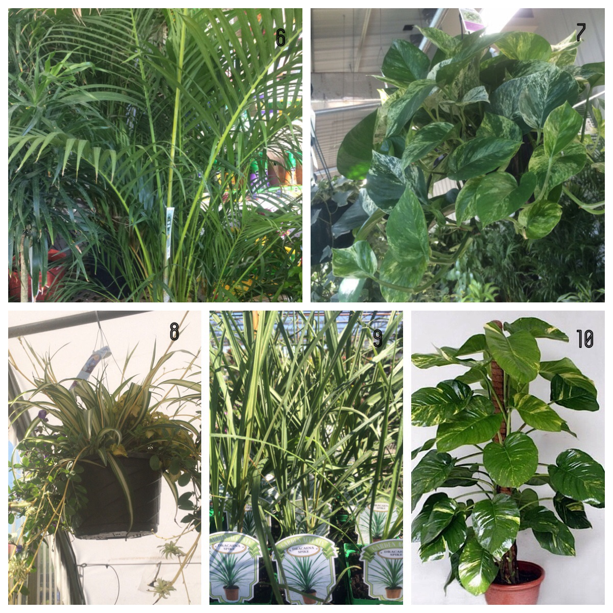 Las mejores plantas para el interior del hogar for Mejores plantas para interior