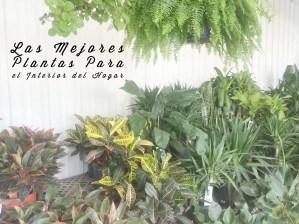 Decoración: Las mejores plantas para el interior del hogar