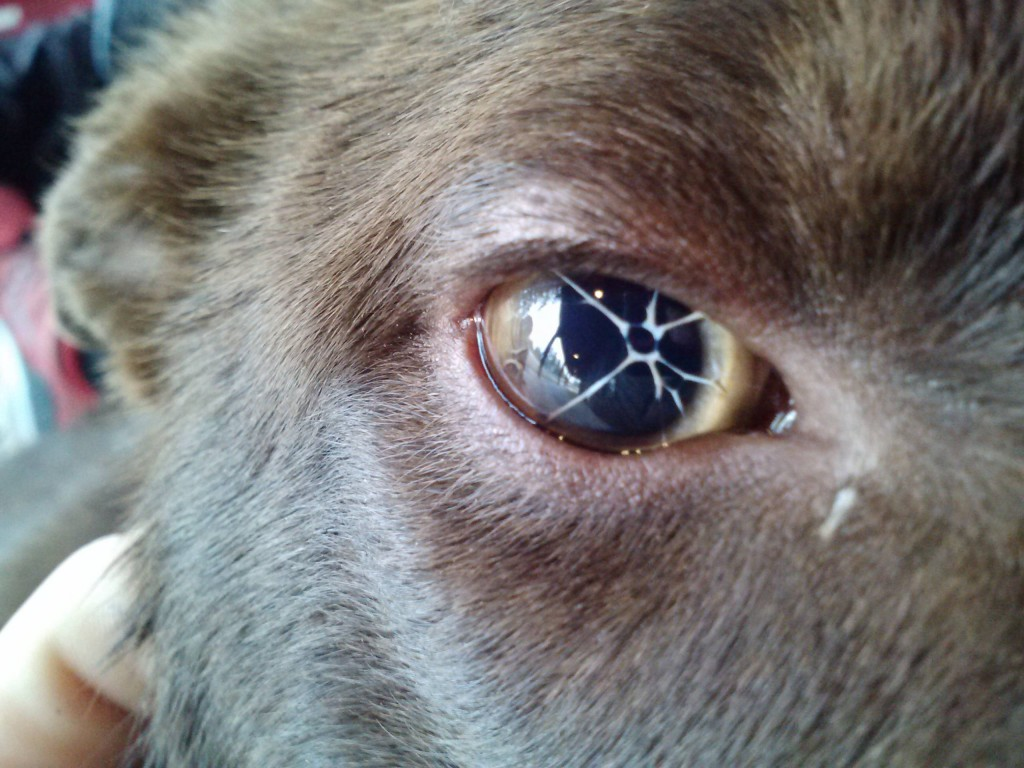 Fullsize Of Dogs Eyes Are Red