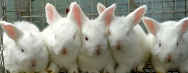 Opals bunnies.jpg