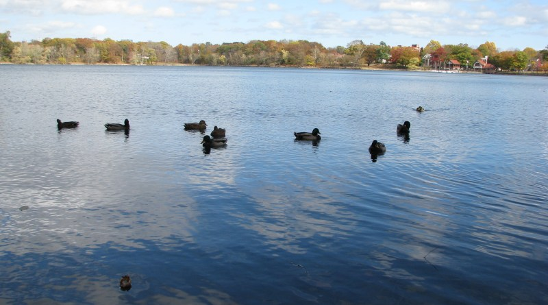 Monday's forecast calls for a picnic-able Jamaica Pond | Photo by Flickr user rezsox