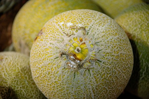 This melon sort of looks like an eyeball. | Photo courtesy of Gaetan Lee via Wikimedia Commons