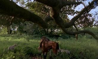 Interview with Filmmaker Carlos Reygadas: Mexican Auteur Brings Post Tenebras Lux to Atlanta