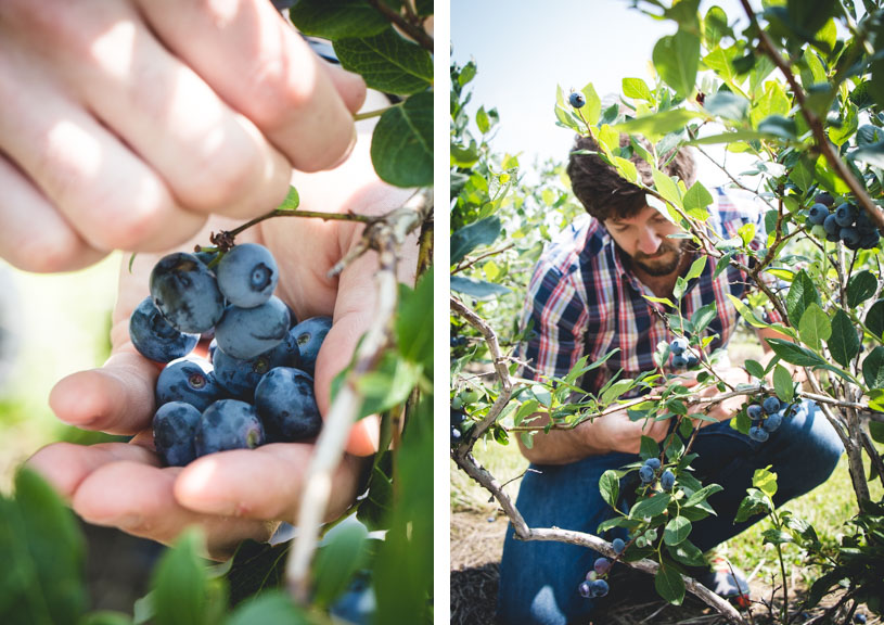 Blueberry Picking, Keuka Lake // butterlust.com