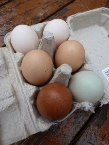 A carton of eggs