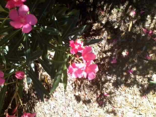 Resize_Flower1_01