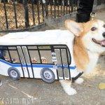 I didn't forget our furry friends! Corgi as a bus. With doggy friends riding said bus. Enough said!