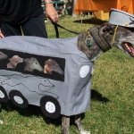 A greyhound as a greyhound bus WITH GREYHOUNDS on board!