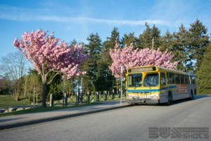 Cherry blossoms? Check. Big yellow bus? Check.