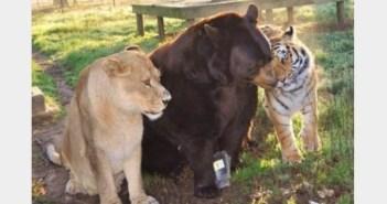 クマとトラとライオンの一家