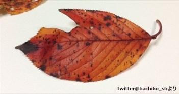 leaf_R