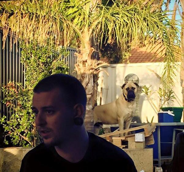 creepy-dog-stalks-owner-cyrus-bullmastiff-lauren-birney-34_R