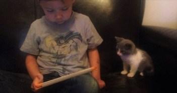 kitten_R