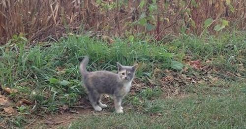 kitty_R