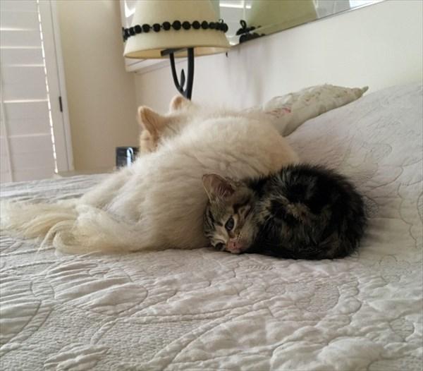 Kitten (10)_R