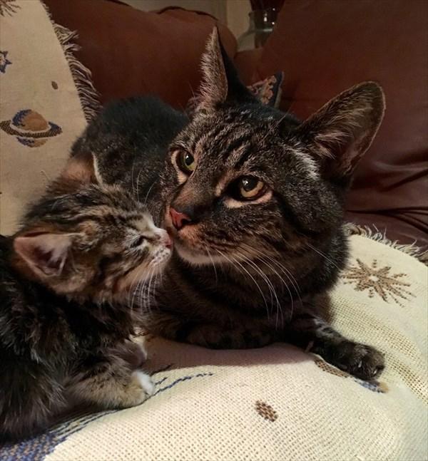 Kitten (1)_R
