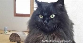 blackcat_R
