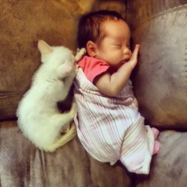 catgirl-1_r