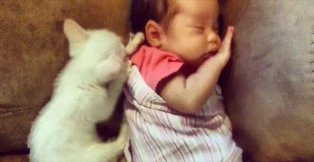 catgirl_eye_r