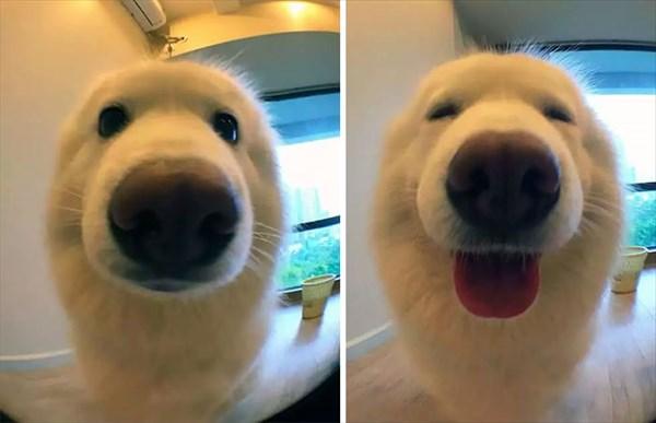 doggood-1_r