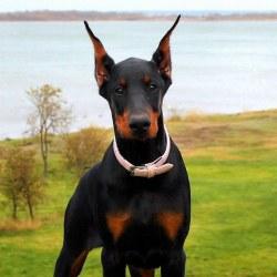 Small Of Black Dog Names
