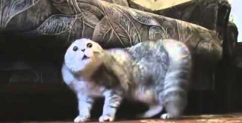 ヘヴィメタ猫がついにあらわるw