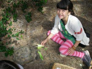 Endangered Species Day 2016 Dovie's tortoise M. Gass photo
