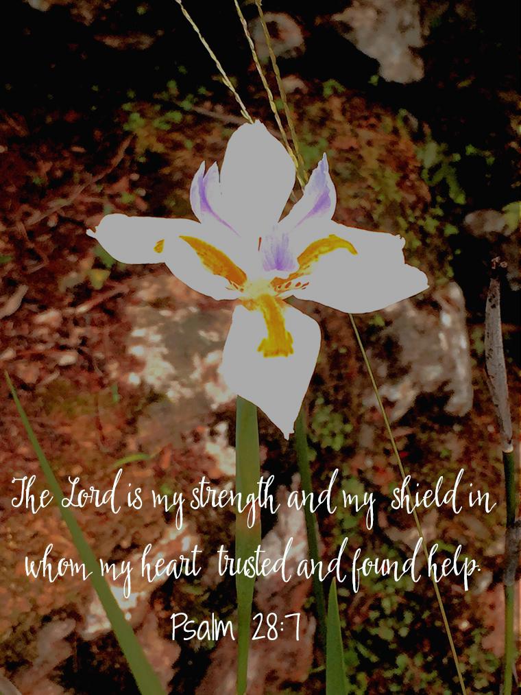 lord is my sheperd1