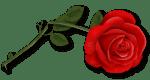 Rose-Trenner
