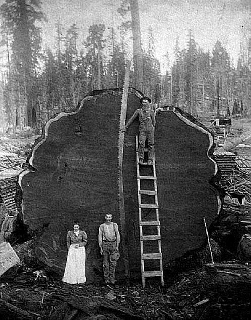 deforestation-amerique-du-nord
