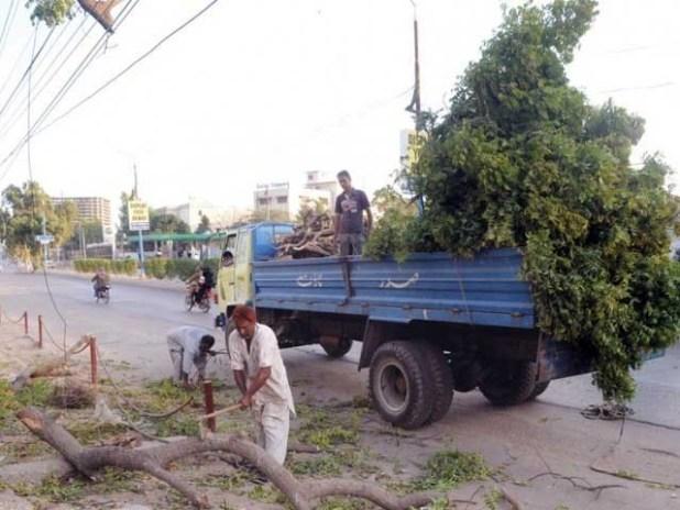 عالمی ادارہ خوراک و زراعت اور ورلڈ بینک کے مطابق پاکستان میں جنگلات بڑھنے کی شرح منفی 2ہے۔ فوٹو؛ فائل