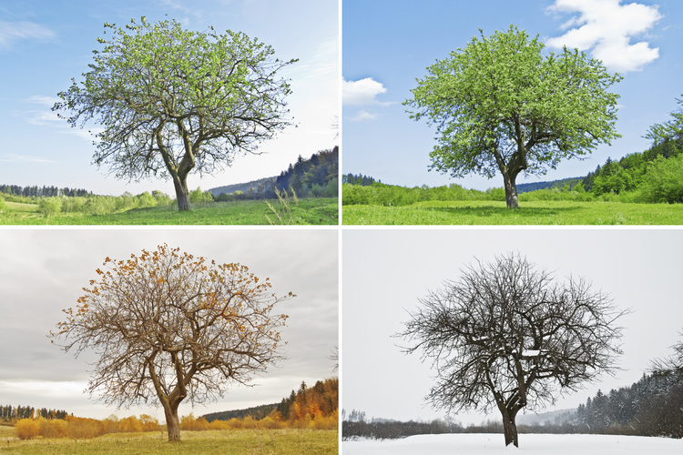 What Causes Seasons  A tree changing through the four seasons