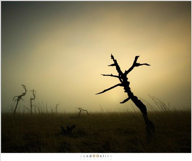 De eerste skeleton trees van Noir Flohay in het licht van een onzichtbare zon. (24mm; ISO100; f/11; t=1/30sec; Lee soft GND0,6)