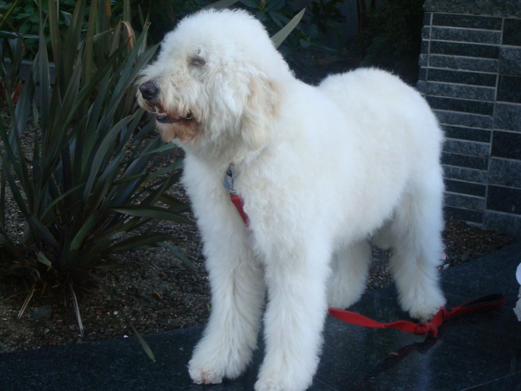 Sleek M Fluffy Dog By Fluffy Dog I Pet Dog So I Flickr Big Fluffy Dog Name Big Fluffy Dog Starting bark post Big Fluffy White Dog