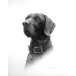 Small Crop Of Realistic Dog Drawing